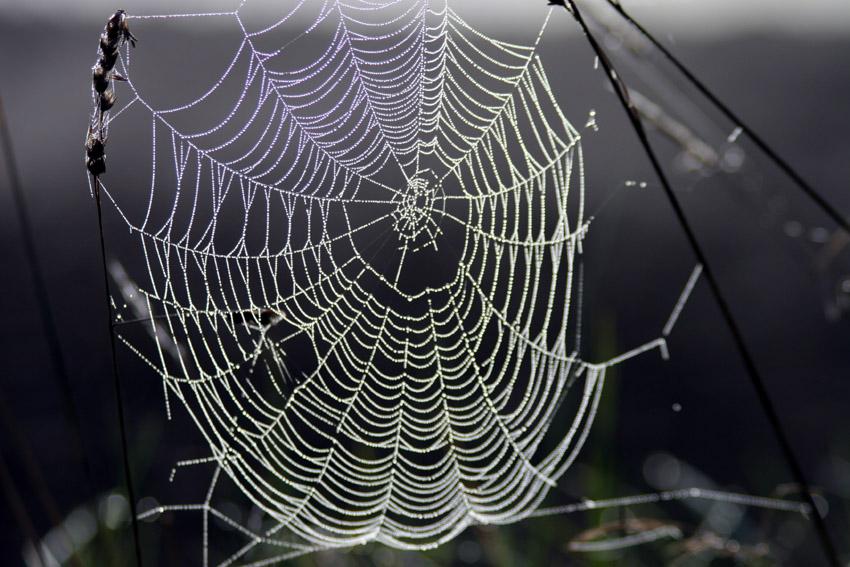 Spinnennetz_im_Gegenlicht